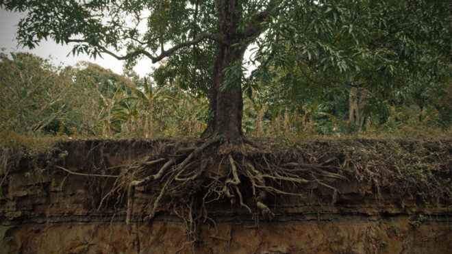 Strong Root Systems