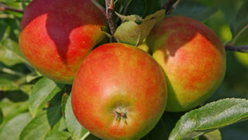 Fruit Trees and Other Edible Plants