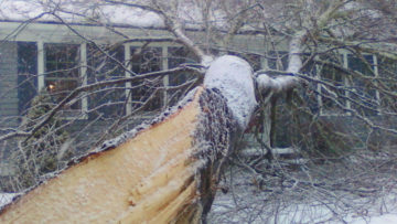 Tree Fall on Your House?