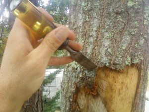 Repairing Damaged Tree Bark