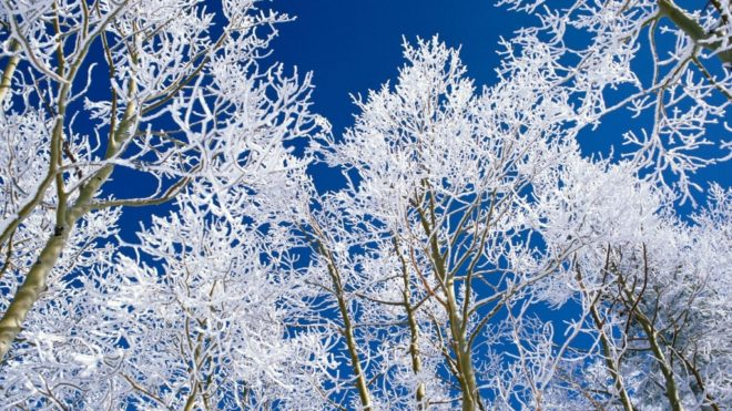 Avoid the Perils of Winter Ice Storms!