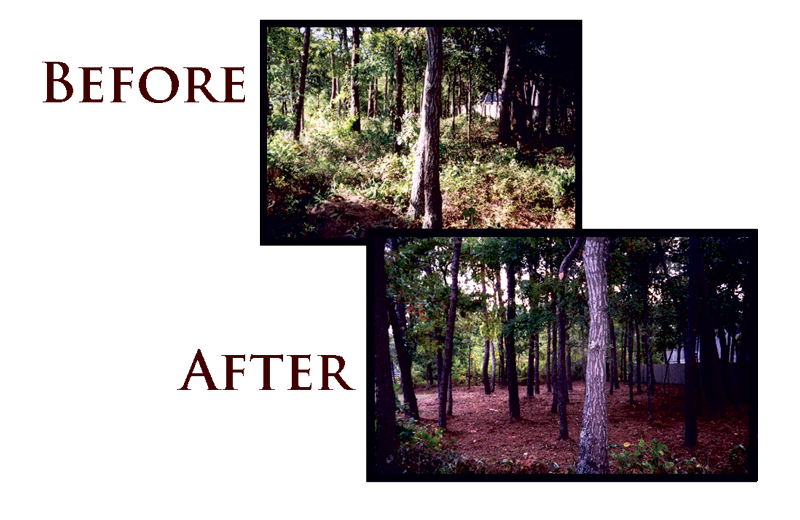 Land Clearing before and after
